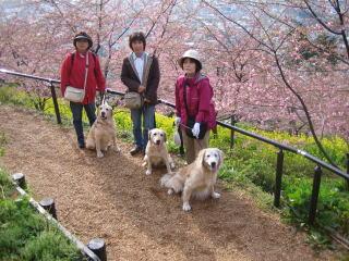 20070217_sakura_00131.jpg