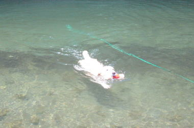 swim21.jpg