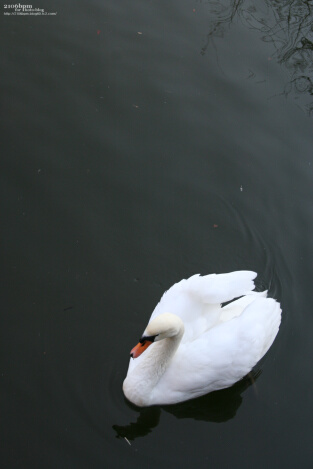 鹿沼公園_17_s
