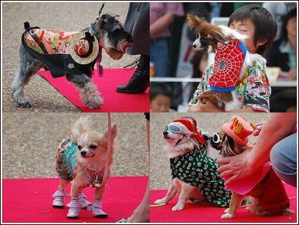 ドッグファッションショー in宝塚