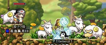 山羊・・羊・・・