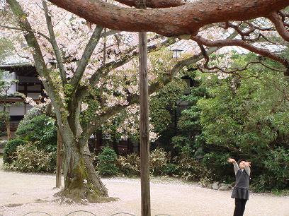 平安神宮・少女と桜