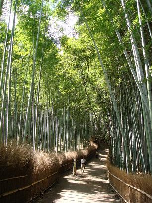 嵯峨野。竹林の小径