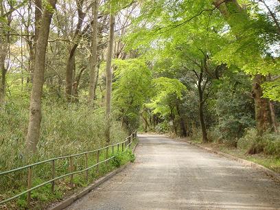 糺の森。歩きながら...
