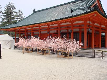 平安神宮・桜のおみくじ