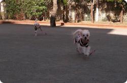 2匹、走る2