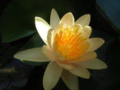 開花1-1
