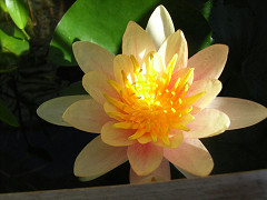 開花2-1