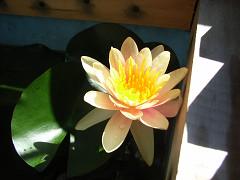 開花2-2