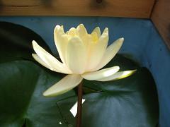 開花2-横