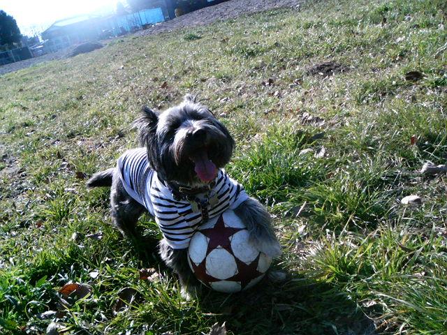 サッカー・テラ