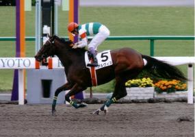 アルヴィス初勝利(11.11京都ダート1200・未勝利)