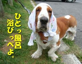 08_shiretoko9.jpg