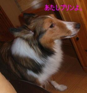 2006.12_maxsan3.jpg