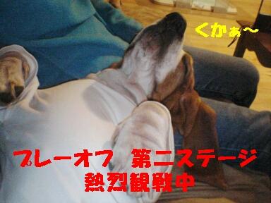 20061011215942.jpg