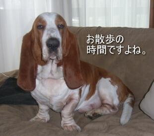 2007.04_fuji3.jpg