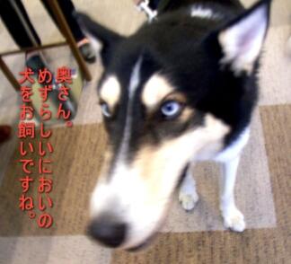 2007.04_fuji4.jpg