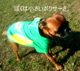 2007.04_green3.jpg