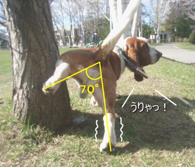 2007.04_shikko2.jpg