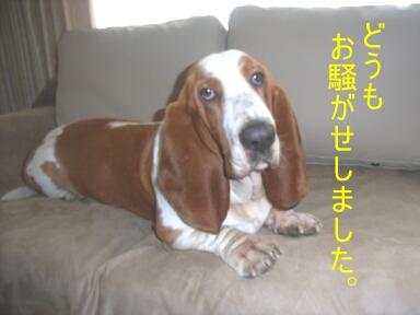 2007.04_sofa.jpg