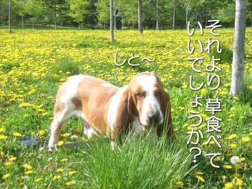 2007.05_tanpopo2.jpg