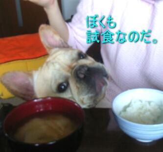 2007.06_tofu4.jpg