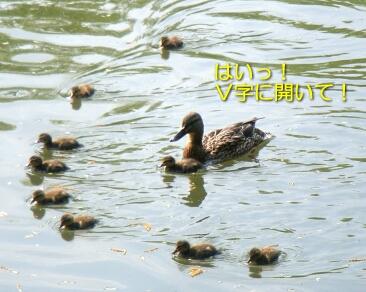 2007.06_yosakoi4.jpg