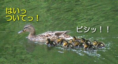 2007.06_yosakoi5.jpg