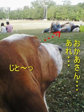 2007.07_envy1.jpg