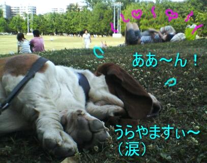 2007.07_envy5.jpg