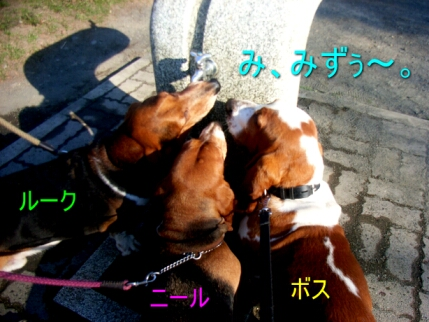 2007.07_syocyu1.jpg
