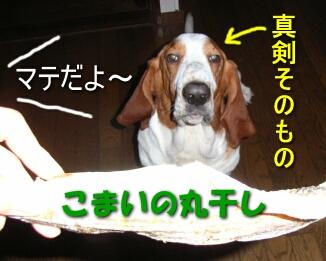 2007.09_komai1.jpg