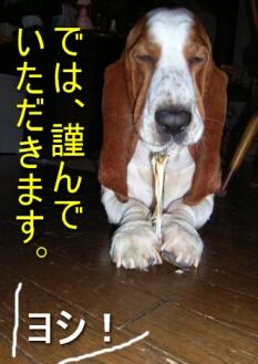 2007.09_komai2.jpg