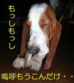 2007.09_komai6.jpg