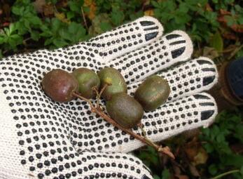 2007.10_grape4.jpg
