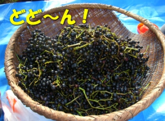 2007.10_grape9.jpg