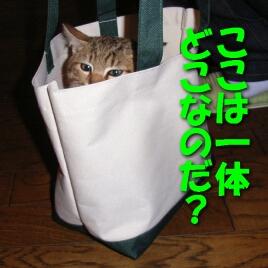 2007.10_kitten_chata1.jpg