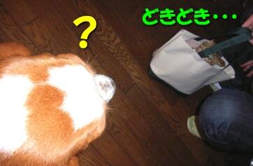 2007.10_kitten_chata2.jpg