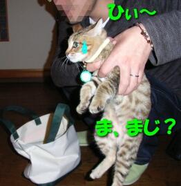 2007.10_kitten_chata3.jpg