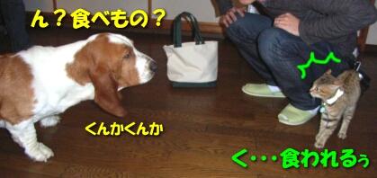 2007.10_kitten_chata4.jpg