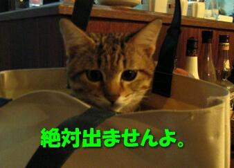 2007.10_kitten_chata5.jpg