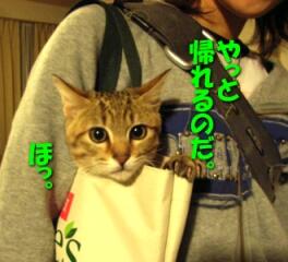 2007.10_kitten_chata6.jpg