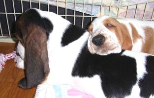 2007.10_puppy2.jpg