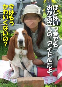 2007.10_puppy7.jpg
