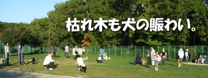 2007.10_run1.jpg