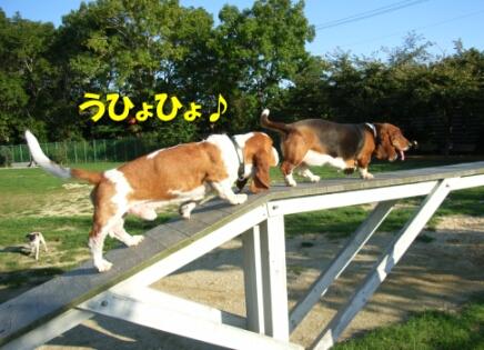2007.10_run6.jpg
