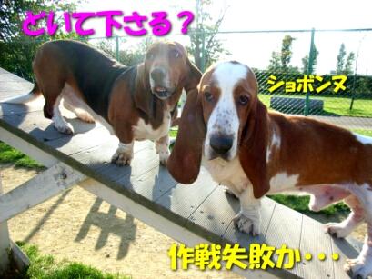 2007.10_run7.jpg