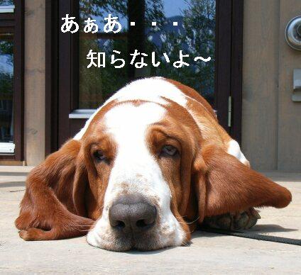 shiranaiyo.jpg