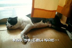 06_07_31_03.jpg