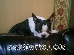 06_08_11_03.jpg